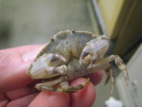 wierd-crab2