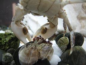 crab-paws