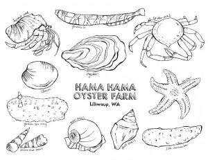 emis-intertidal-creatures